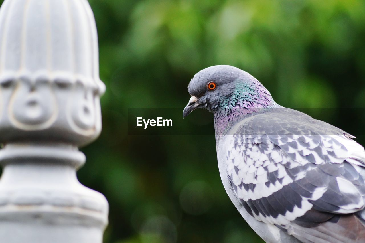 Close-Up Of Pigeon Perching By Railing