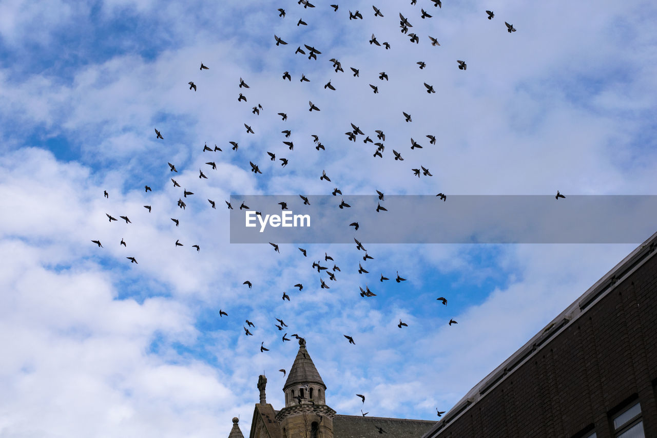 Flock Of Birds Flying Over Church Against Sky