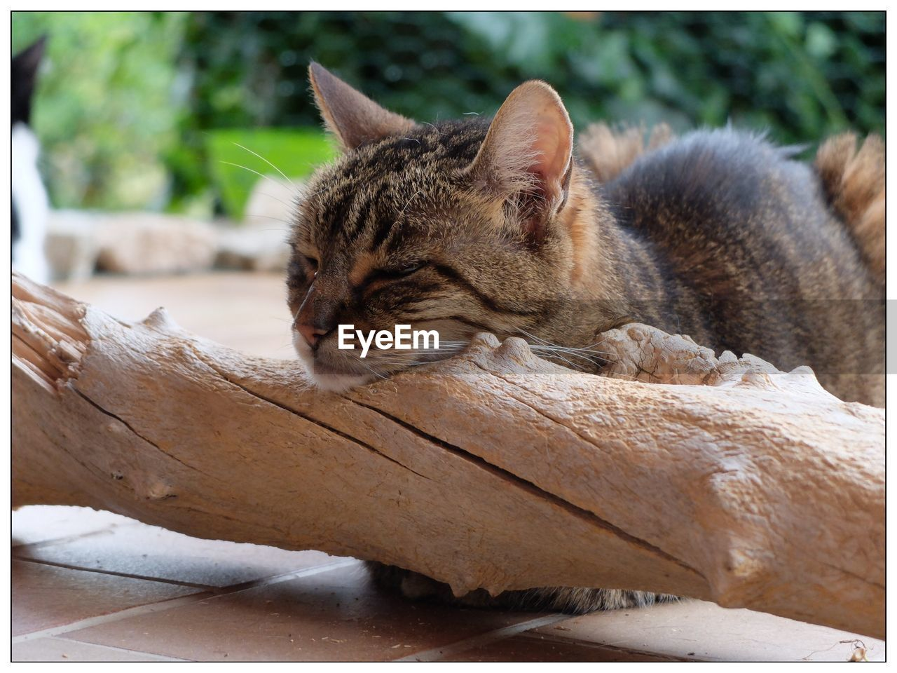 mammal, animal themes, one animal, cat, feline, animal, pets, domestic animals, domestic, domestic cat, vertebrate, relaxation, transfer print, auto post production filter, focus on foreground, no people, resting, day, close-up, eyes closed, whisker, animal head