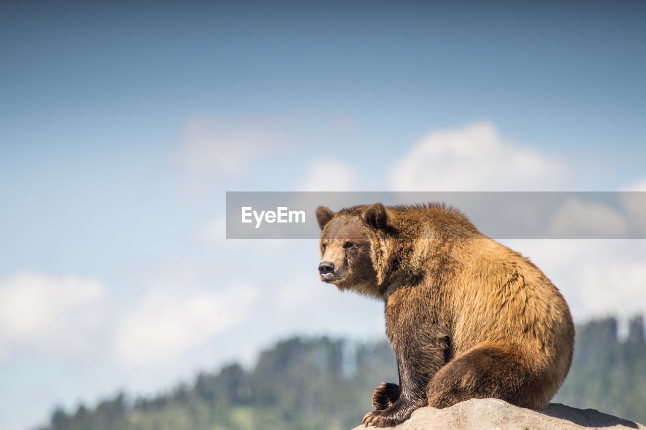 Low Angle View Of Bear Sitting On Rock Against Sky