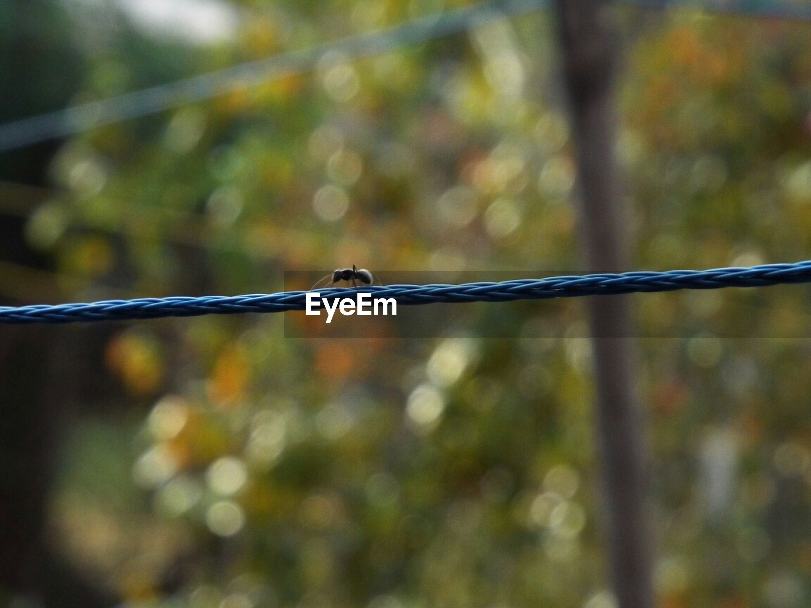 focus on foreground, close-up, metal, protection, safety, fence, security, barbed wire, chainlink fence, metallic, selective focus, day, twig, outdoors, nature, no people, drop, detail, connection, spider web