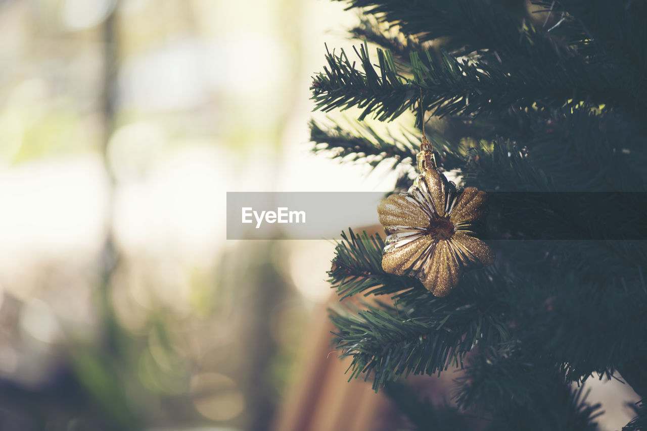 tree, holiday, christmas, christmas decoration, plant, celebration, close-up, focus on foreground, christmas tree, decoration, no people, selective focus, holiday - event, nature, christmas ornament, day, green color, celebration event, branch, pine tree, outdoors, needle - plant part, coniferous tree, fir tree
