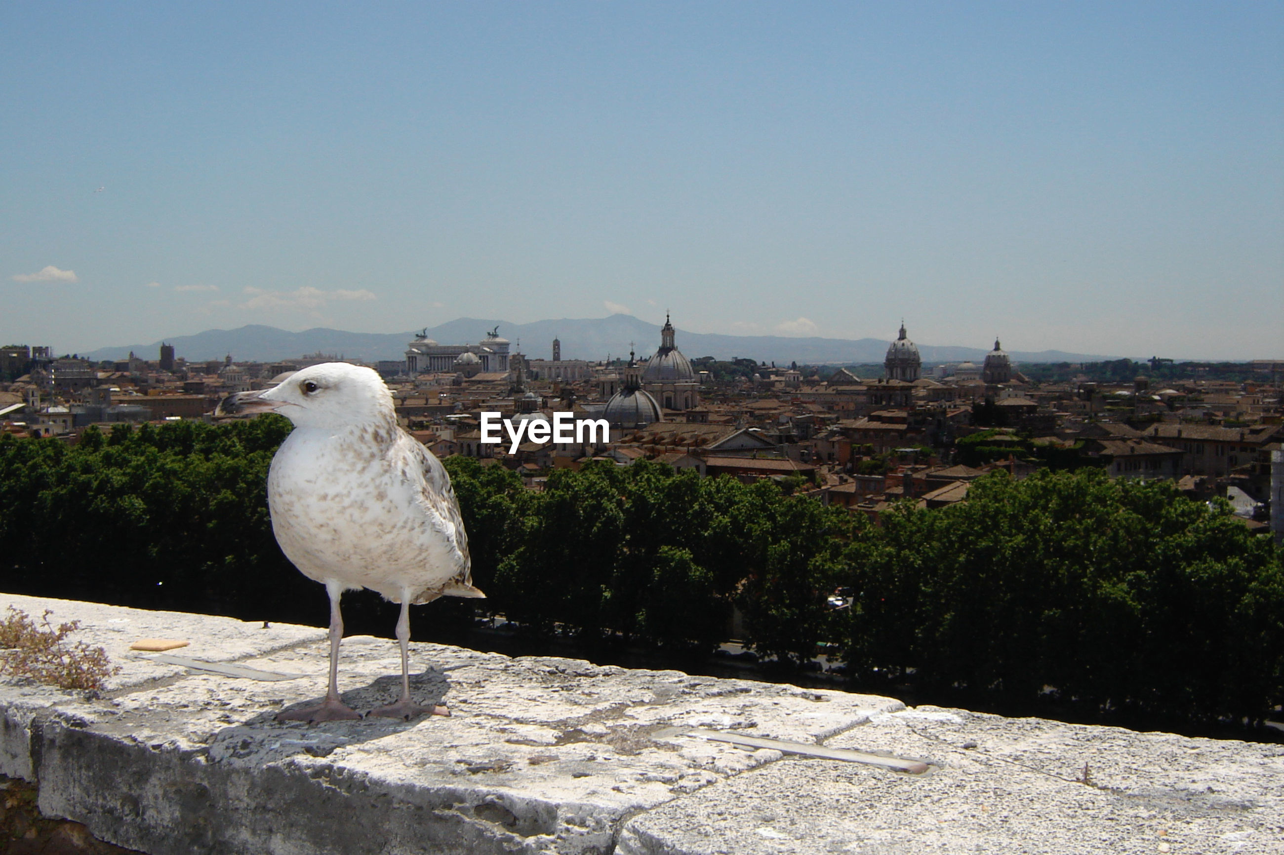 Close-up of seagull in front of cityscape