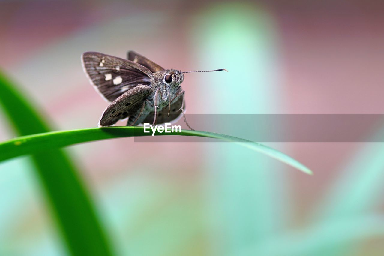 animal themes, animal wildlife, animals in the wild, animal, one animal, insect, invertebrate, close-up, animal wing, selective focus, no people, focus on foreground, beauty in nature, plant, day, nature, fragility, vulnerability, plant part, butterfly - insect, butterfly, pollination