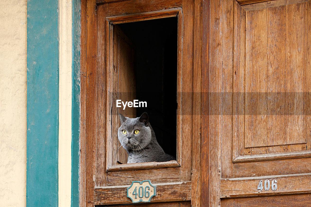 PORTRAIT OF A CAT ON WOODEN WINDOW