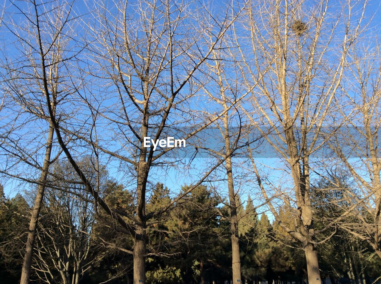 tree, bare tree, branch, day, no people, outdoors, low angle view, clear sky, nature, growth, sky, beauty in nature