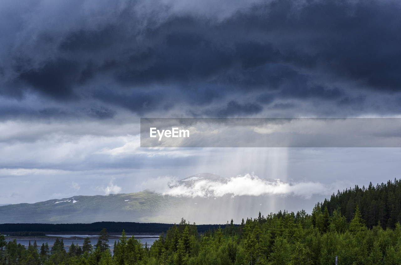 PANORAMIC VIEW OF TREES AND FOREST AGAINST SKY