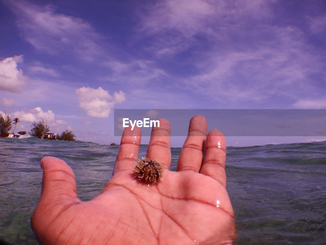 Close-up of hand holding sea urchin against sky