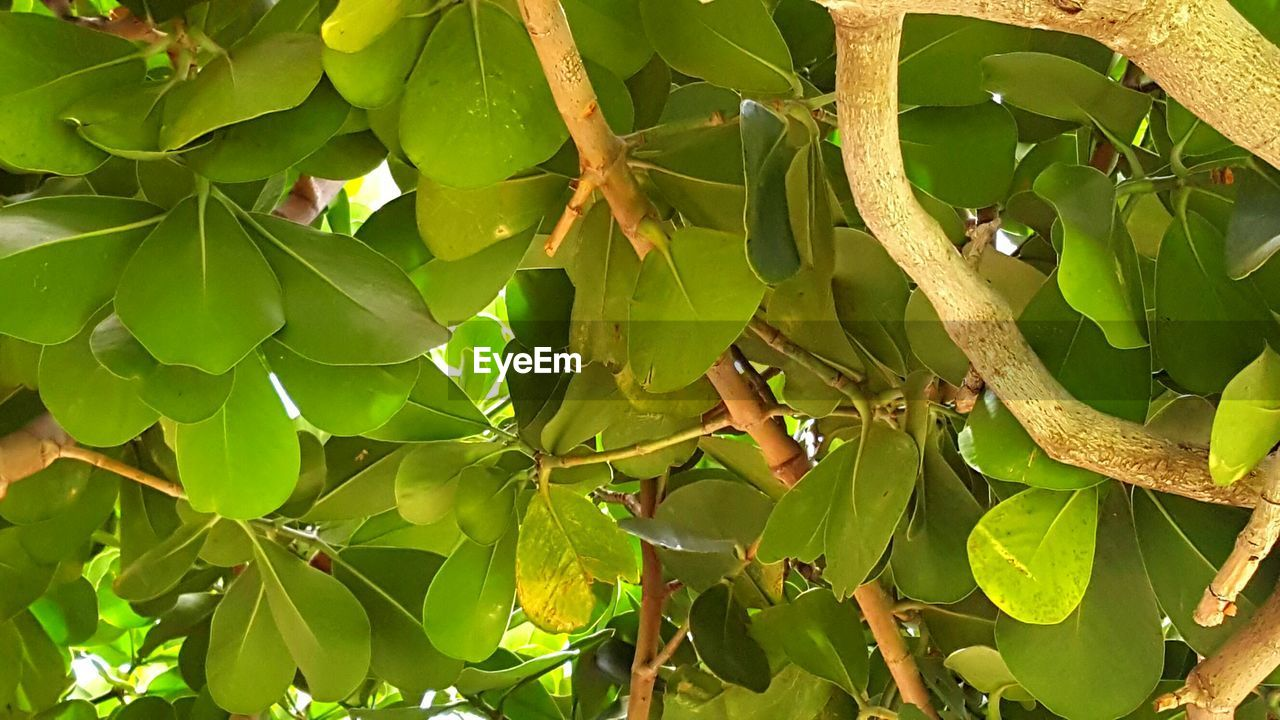 leaf, green color, growth, plant, nature, day, no people, outdoors, beauty in nature, one animal, banana tree, animals in the wild, tree, close-up, banana leaf, animal themes, food, freshness