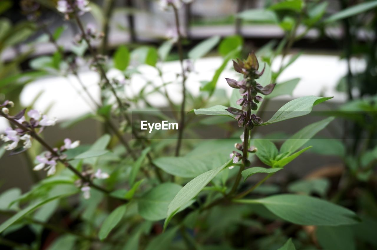 nature, growth, plant, green color, leaf, no people, day, outdoors, beauty in nature, fragility, close-up, freshness, flower