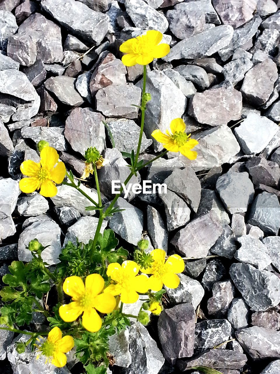 flower, yellow, petal, fragility, growth, nature, flower head, plant, beauty in nature, no people, freshness, day, outdoors, blooming, close-up, full frame