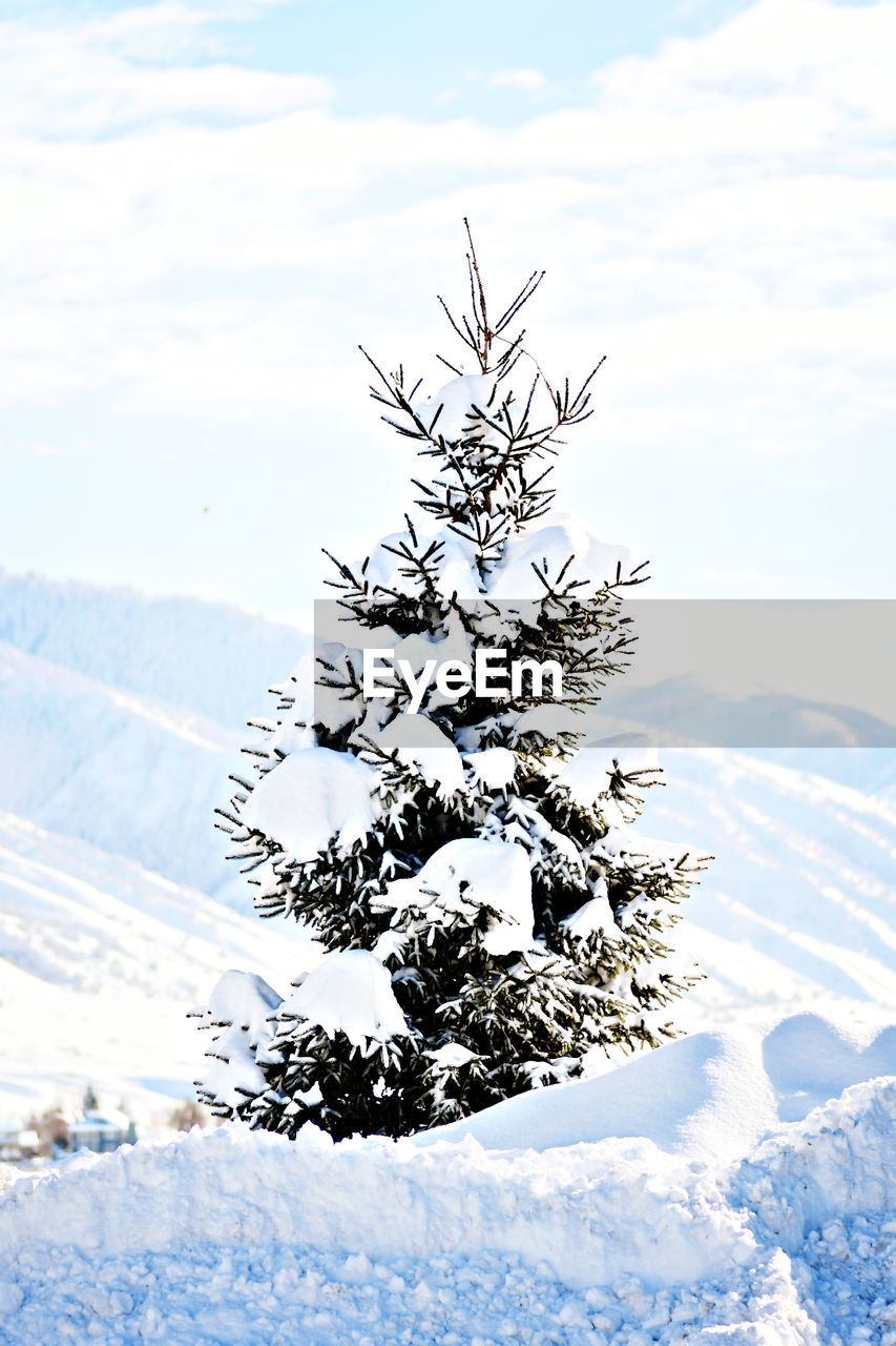 snow, winter, cold temperature, nature, weather, no people, cloud - sky, day, outdoors, sky, scenics, beauty in nature, mountain, close-up