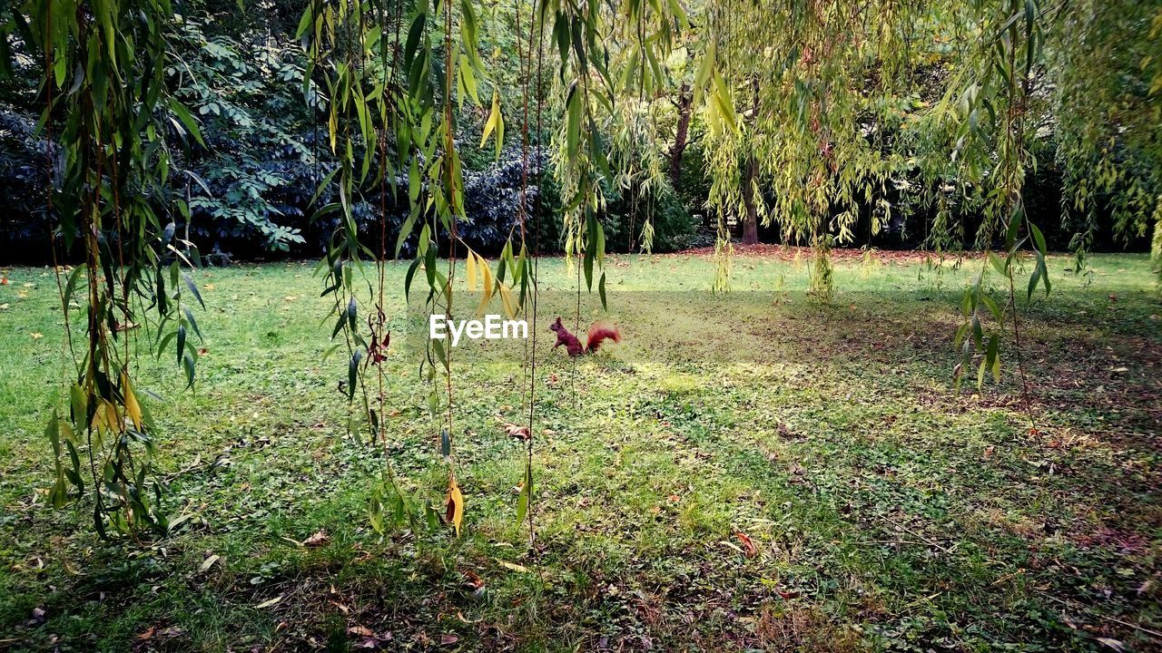 grass, animal themes, domestic animals, tree, mammal, one animal, nature, growth, no people, outdoors, field, day, pets, plant, landscape