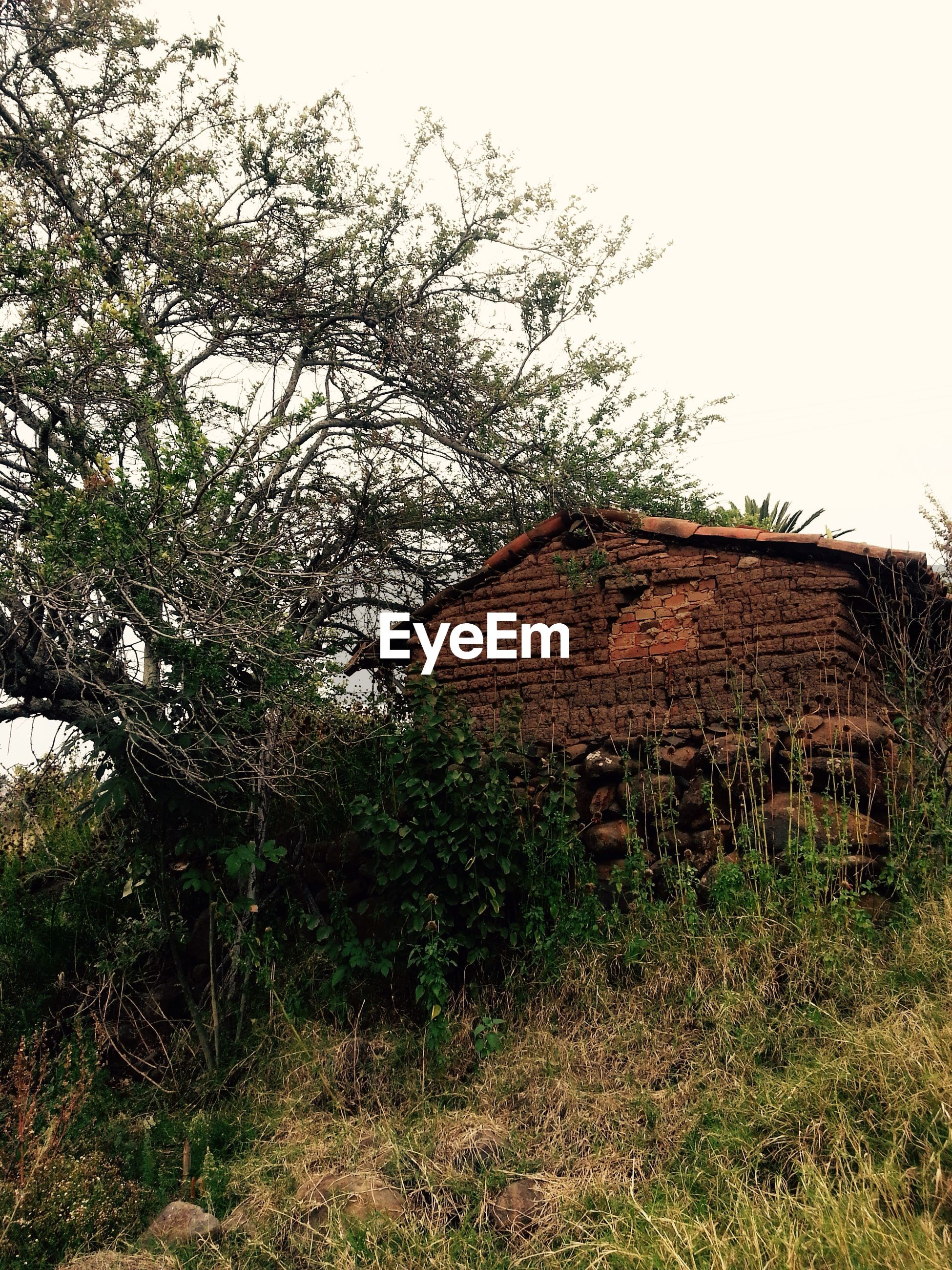 architecture, built structure, building exterior, house, residential structure, abandoned, tree, old, clear sky, sky, plant, grass, residential building, window, damaged, obsolete, growth, low angle view, day, outdoors