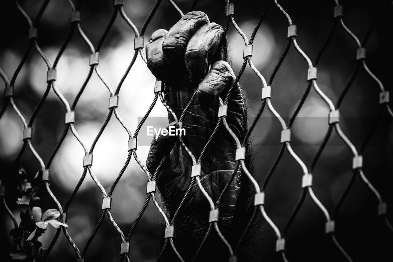 Cropped hand of monkey holding fence