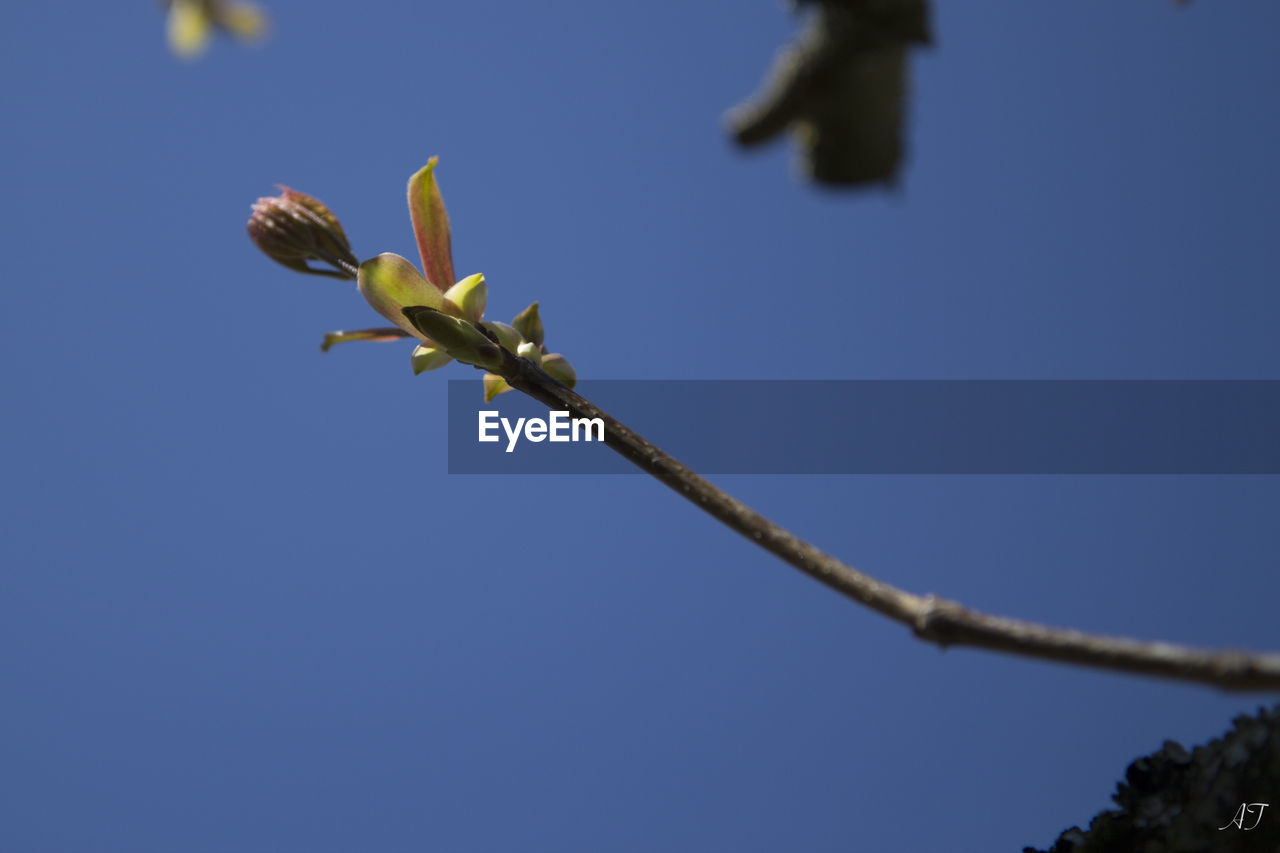 growth, nature, low angle view, blue, plant, flower, day, no people, fragility, beauty in nature, outdoors, clear sky, freshness, close-up