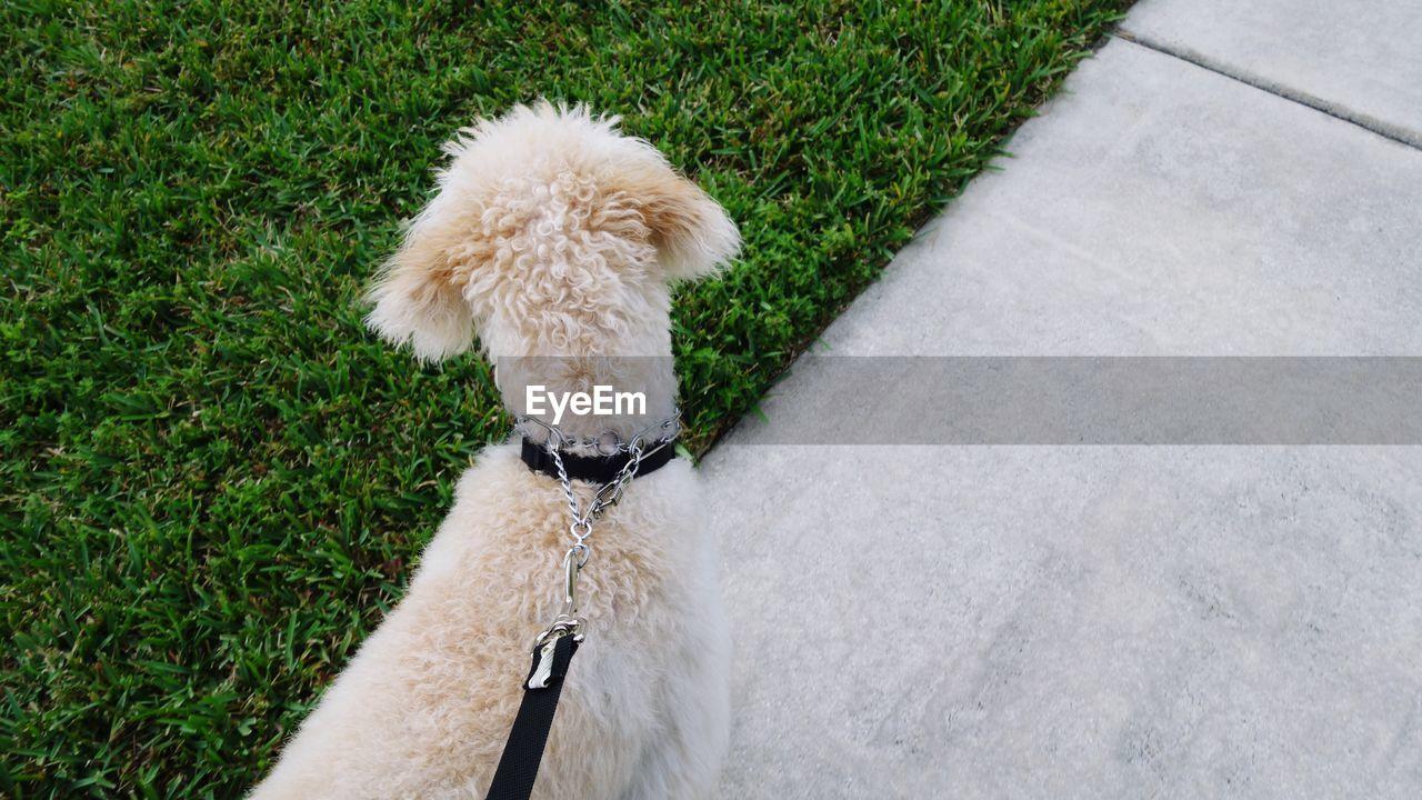 HIGH ANGLE VIEW OF DOG ON GRASSLAND