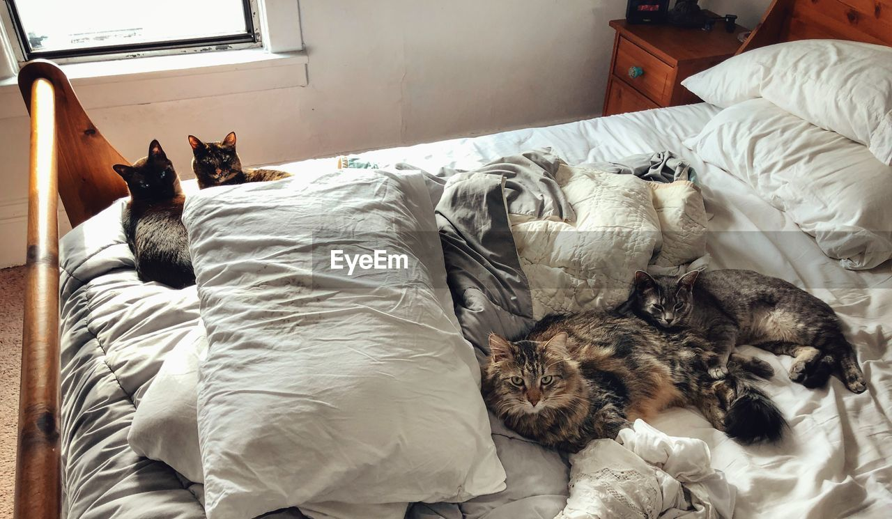 High angle view of cats sleeping on bed