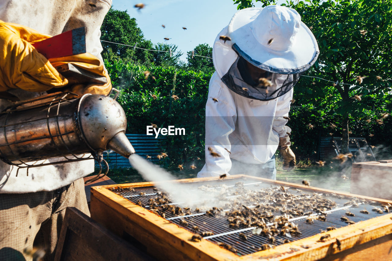 Beekeepers Inspects Beehive
