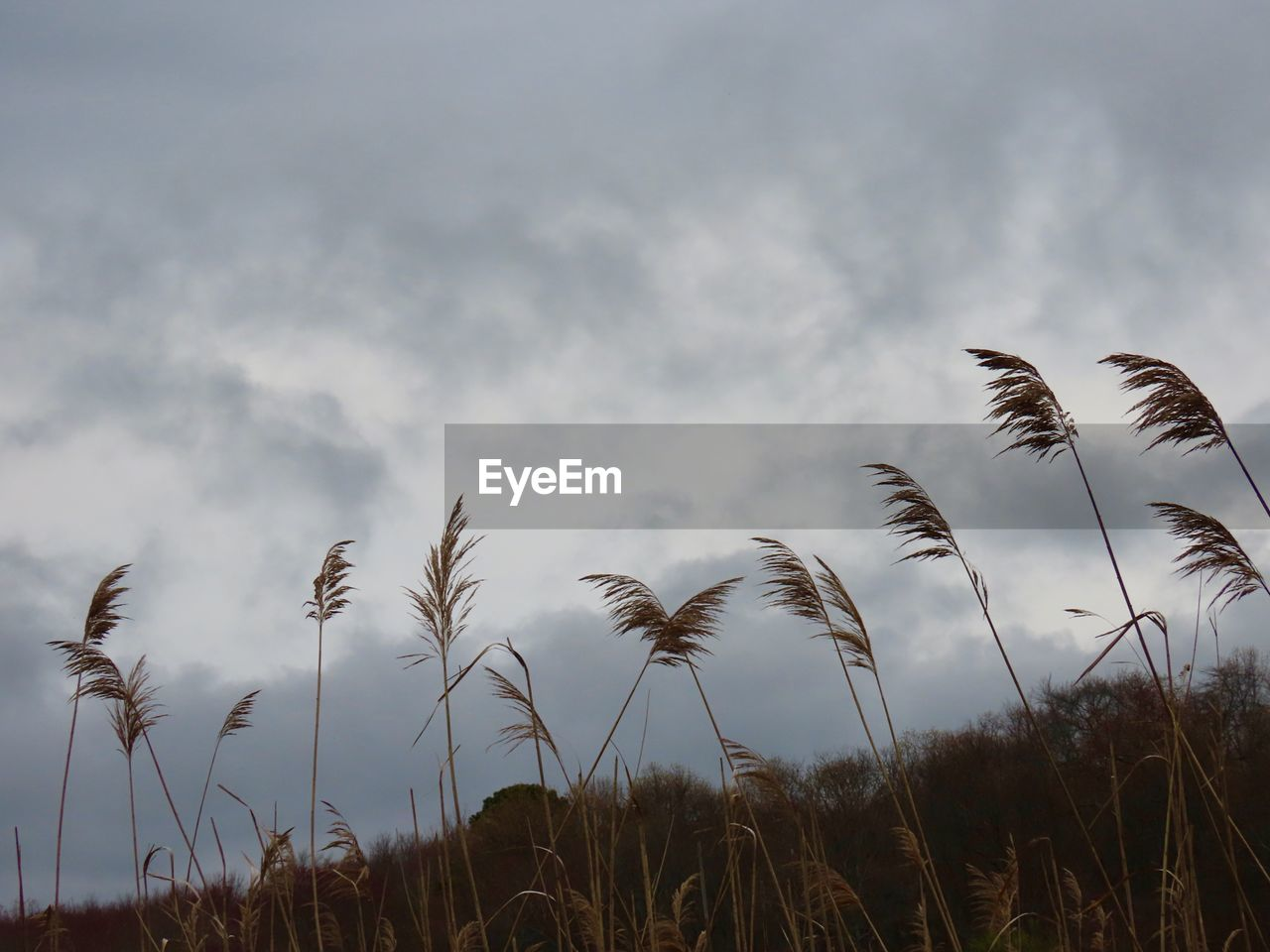 sky, cloud - sky, plant, growth, beauty in nature, tranquility, nature, no people, tranquil scene, scenics - nature, low angle view, environment, day, land, outdoors, grass, field, landscape, sunset, non-urban scene, timothy grass, stalk