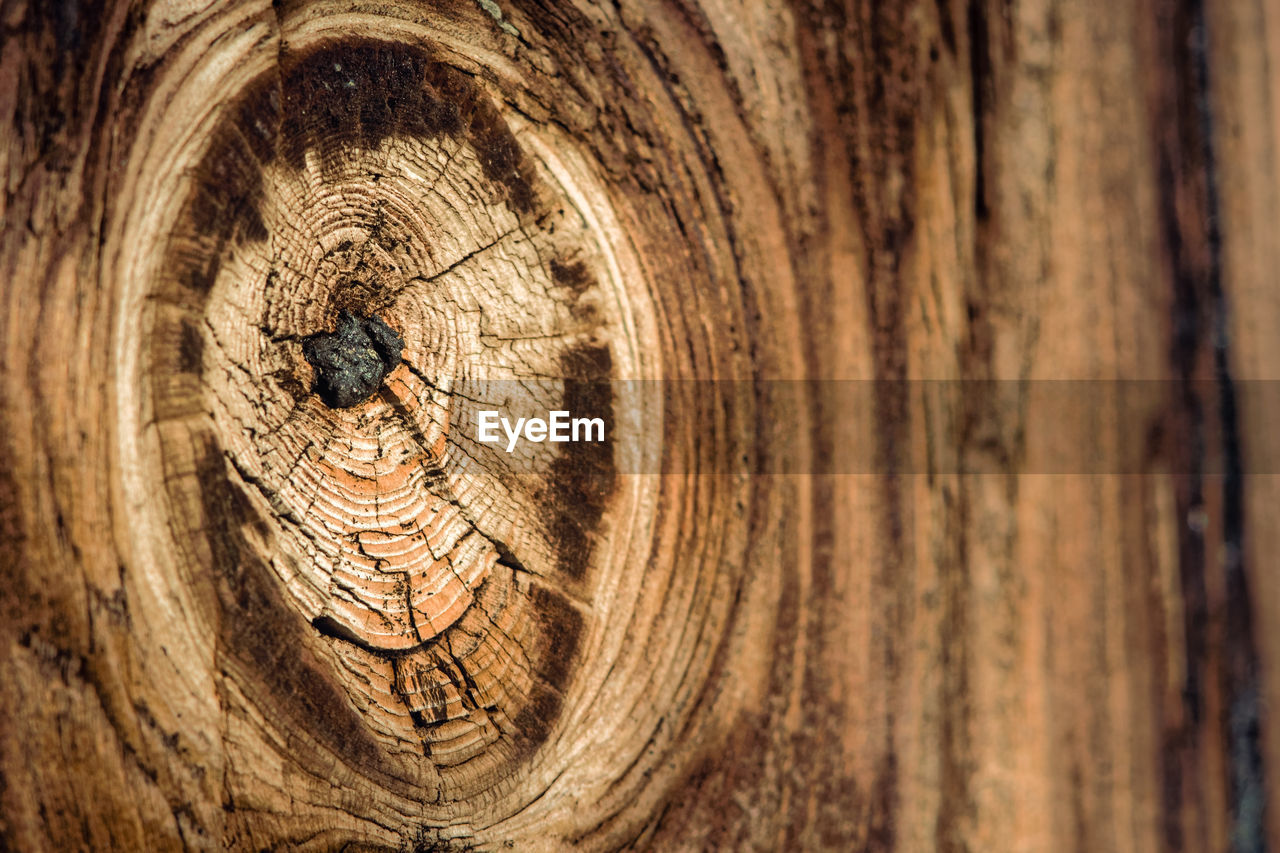 wood - material, tree, close-up, textured, no people, pattern, backgrounds, full frame, brown, wood, tree trunk, natural pattern, history, shape, the past, trunk, nature, day, outdoors, circle, tree ring, wood grain, bark
