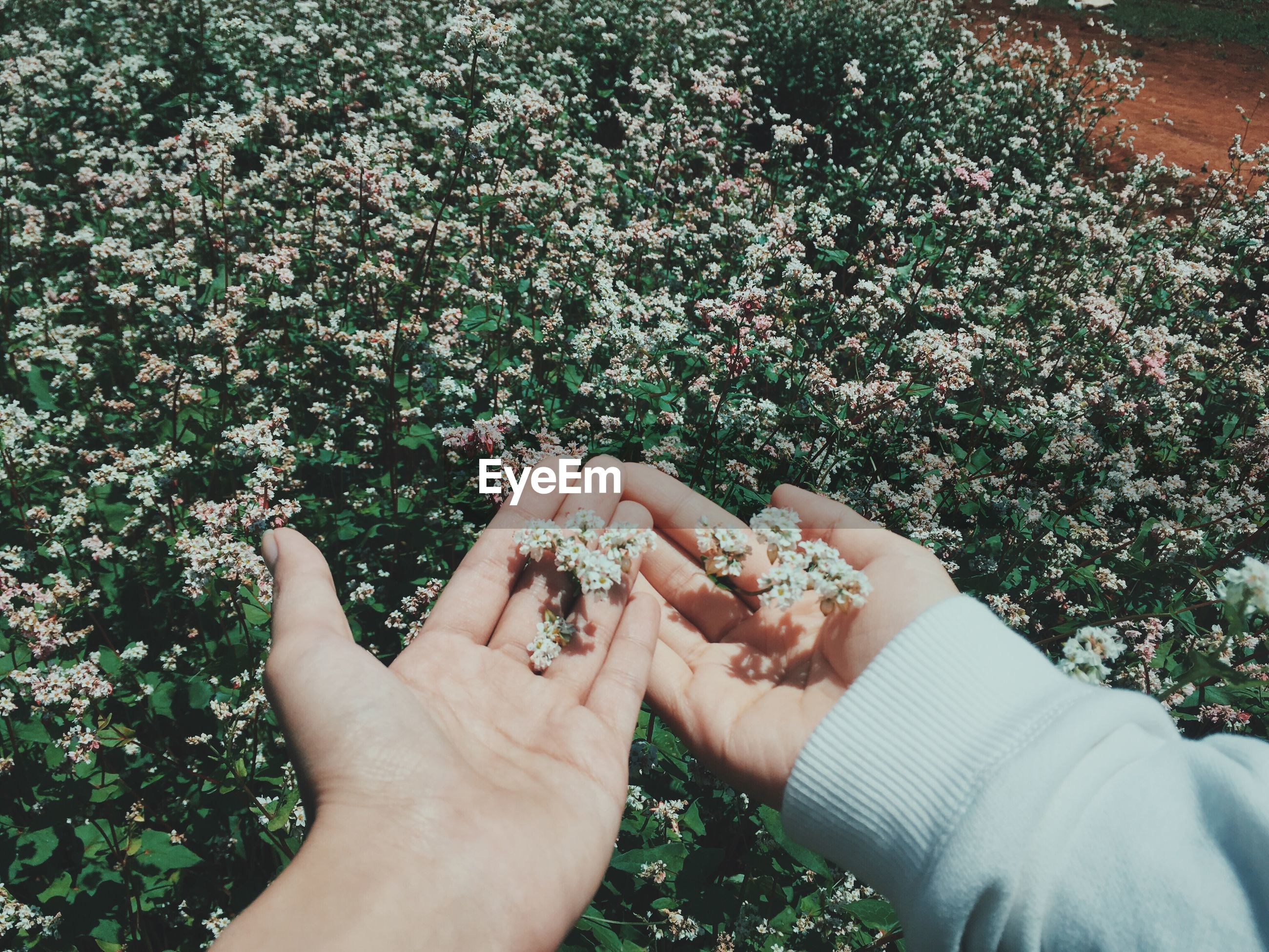 Cropped hands holding flowering plants