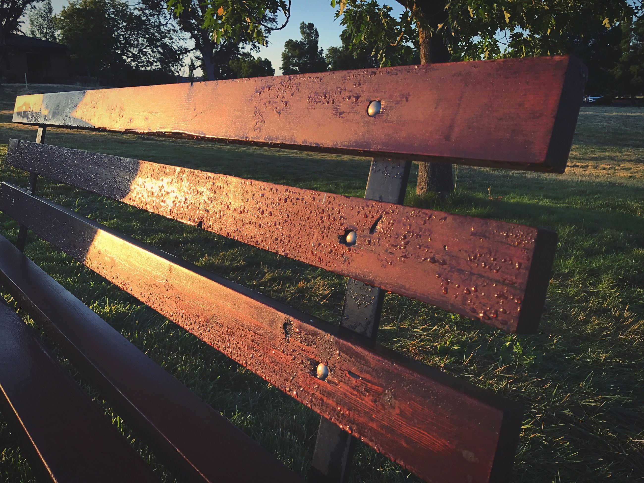 Water drops on wooden bench at park during sunrise