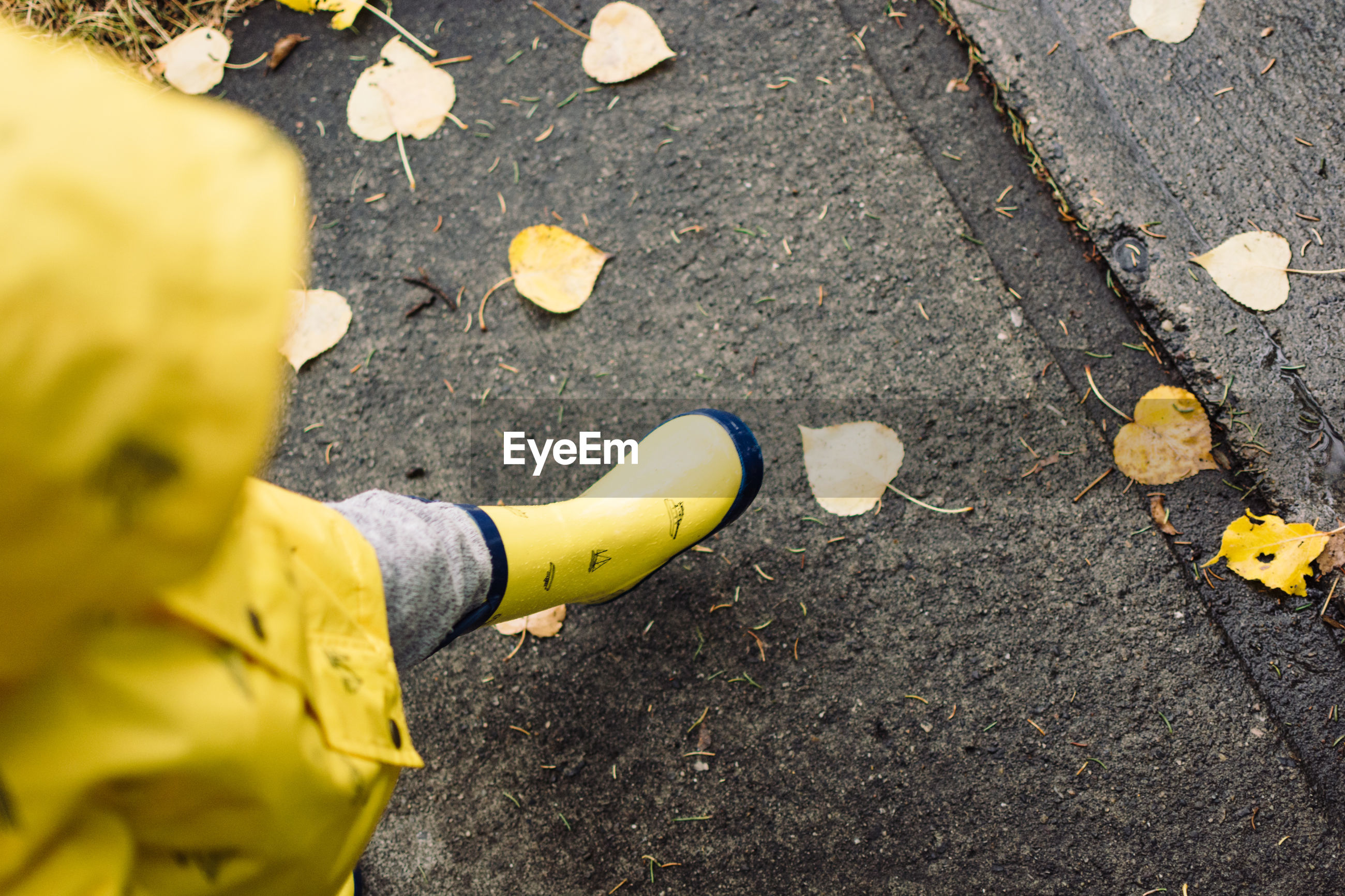 High angle view of child walking on road during autumn