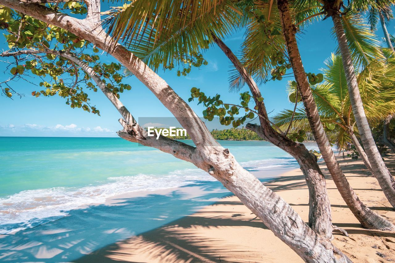 water, sea, tree, sky, beach, tropical climate, palm tree, land, plant, tranquility, horizon over water, beauty in nature, horizon, scenics - nature, nature, tranquil scene, day, trunk, tree trunk, no people, outdoors, coconut palm tree, turquoise colored