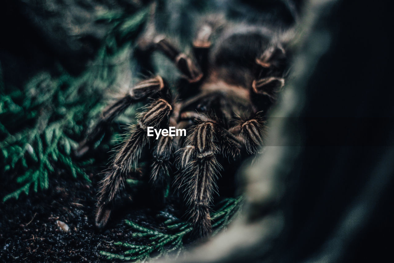 close-up, selective focus, arachnid, spider, arthropod, no people, invertebrate, insect, one animal, day, nature, plant, growth, outdoors, macro, animal, jumping spider, extreme close-up, zoology, animal themes