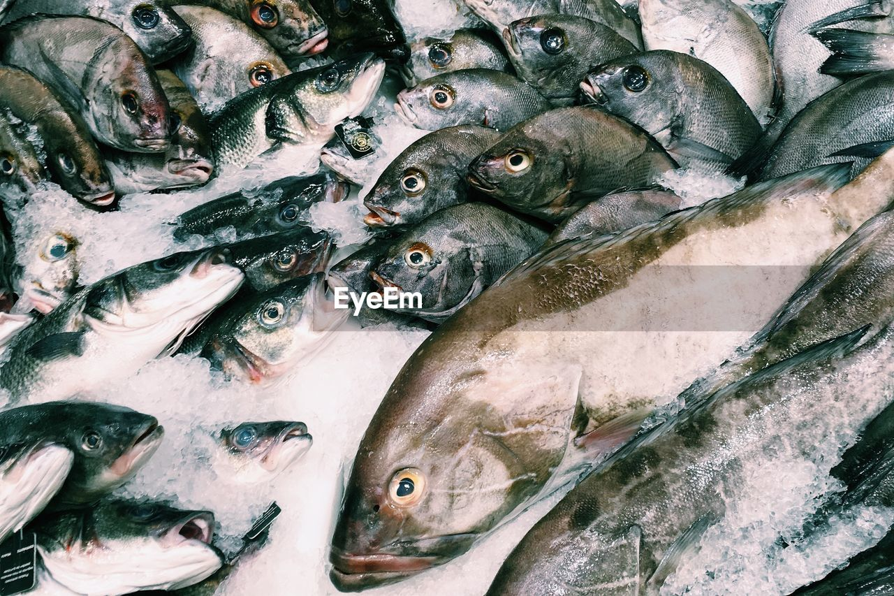 Fishes On Ice In Market For Sale