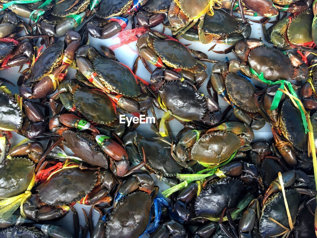seafood, animal, full frame, food and drink, food, animal wildlife, freshness, animal themes, no people, vertebrate, fish, backgrounds, high angle view, animals in the wild, group of animals, close-up, raw food, crab, wellbeing, large group of animals, marine, fishing industry