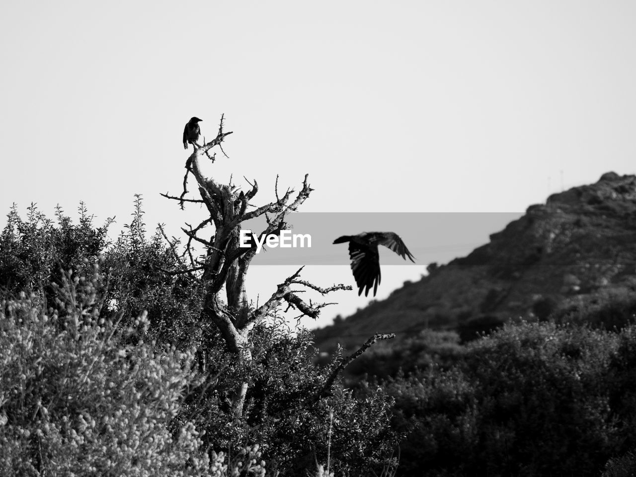 animal themes, animal, animal wildlife, sky, animals in the wild, vertebrate, bird, nature, plant, clear sky, perching, tree, day, no people, group of animals, two animals, outdoors, growth