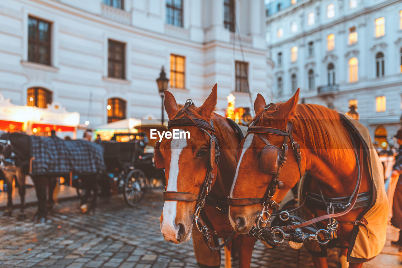 building exterior, architecture, animal, built structure, city, mammal, animal themes, horse, animal wildlife, domestic animals, horse cart, pets, domestic, vertebrate, livestock, street, working animal, focus on foreground, cart, building, horsedrawn, outdoors, herbivorous
