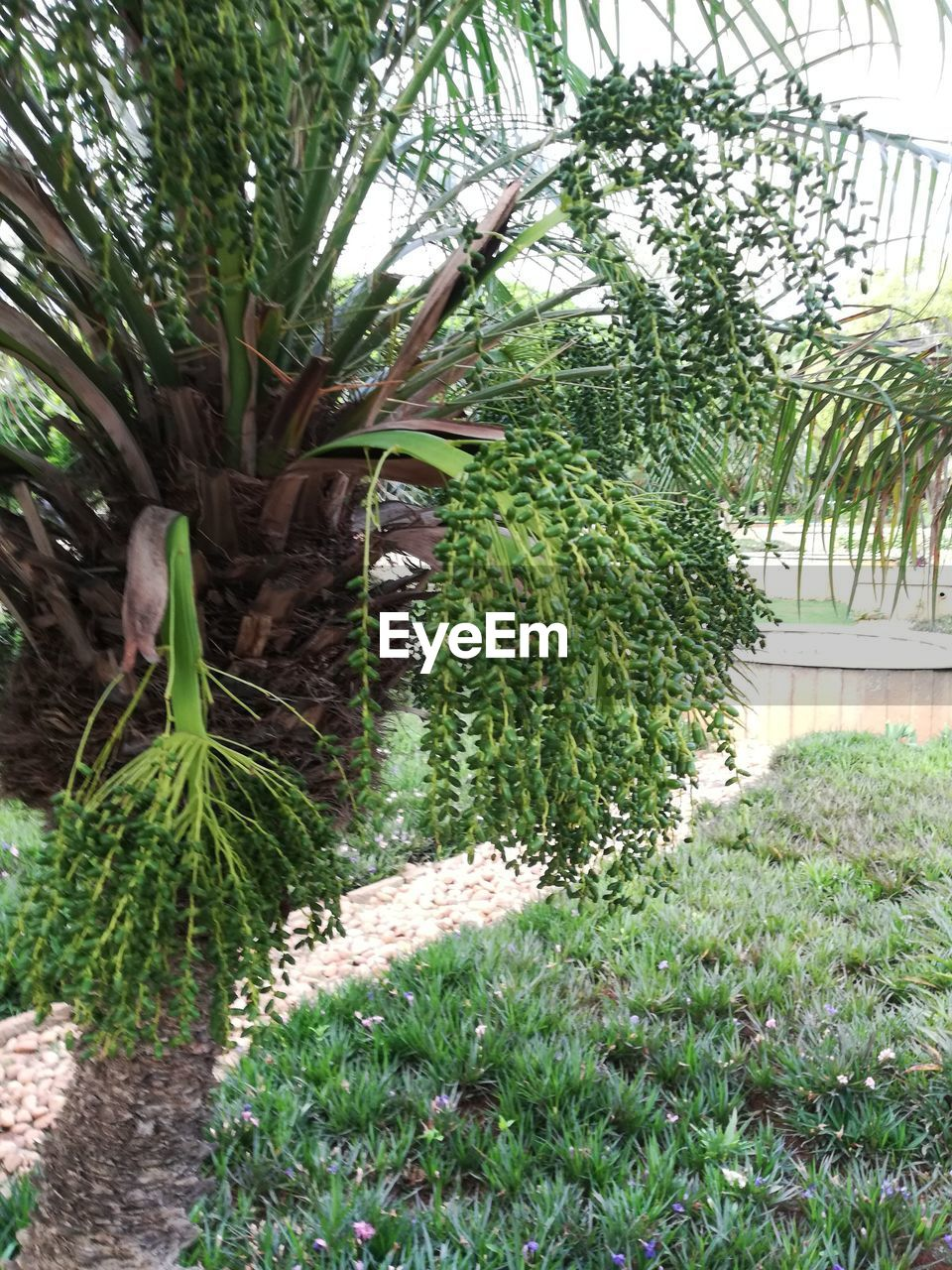 plant, growth, green color, tree, nature, day, no people, beauty in nature, tranquility, grass, outdoors, front or back yard, garden, leaf, plant part, footpath, palm tree, formal garden, land, tropical climate