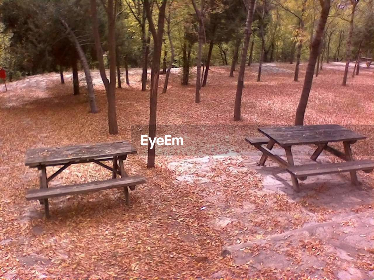 bench, tree, autumn, tranquility, absence, nature, tranquil scene, park - man made space, scenics, outdoors, change, landscape, day, no people, beauty in nature, leaf, chair, seat