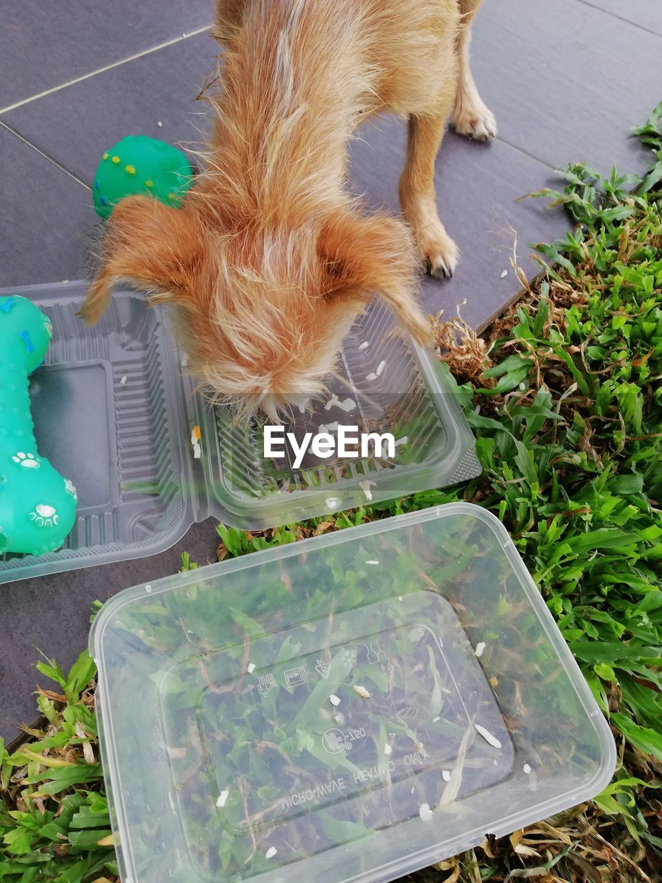 pets, domestic animals, domestic, animal themes, mammal, one animal, animal, vertebrate, high angle view, dog, canine, no people, green color, day, container, plant, nature, cat, outdoors, feline