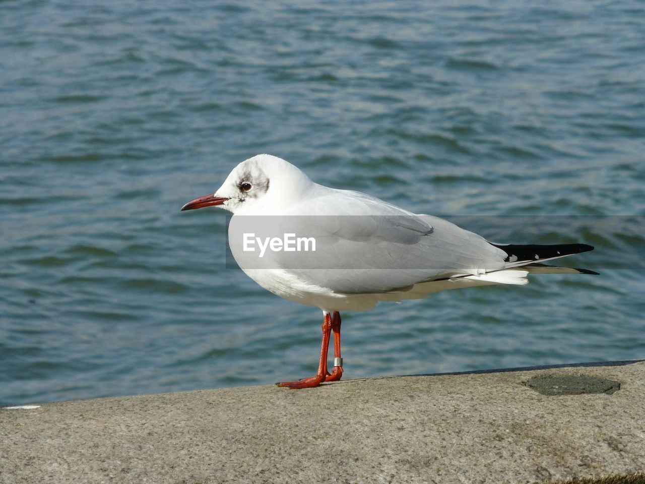 animals in the wild, animal themes, bird, animal, animal wildlife, one animal, vertebrate, water, seagull, sea, perching, focus on foreground, day, nature, beach, sea bird, white color, no people, side view