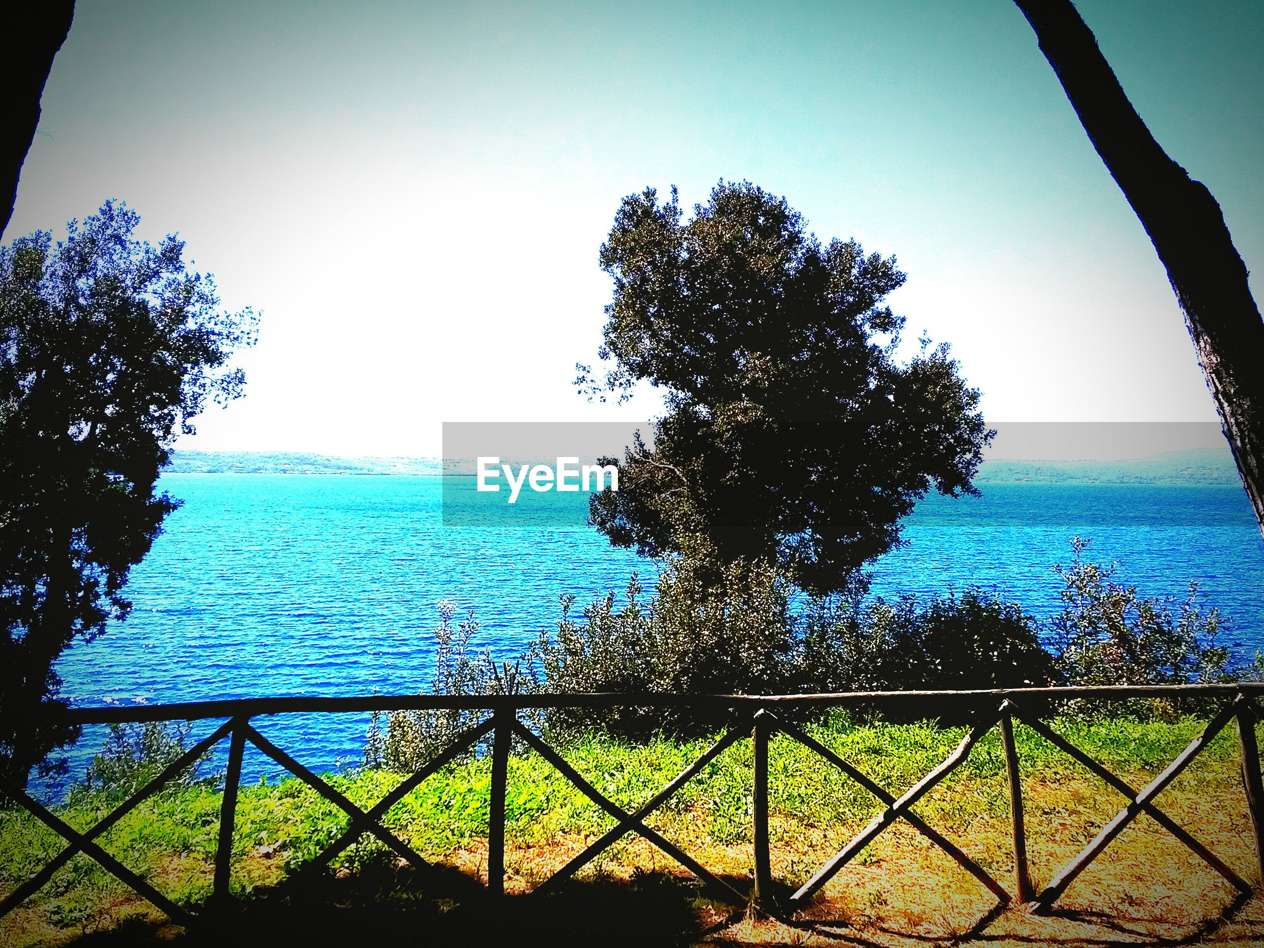 water, tree, railing, clear sky, tranquility, sky, tranquil scene, sea, scenics, nature, beauty in nature, branch, sunlight, blue, growth, day, lake, horizon over water, outdoors, river