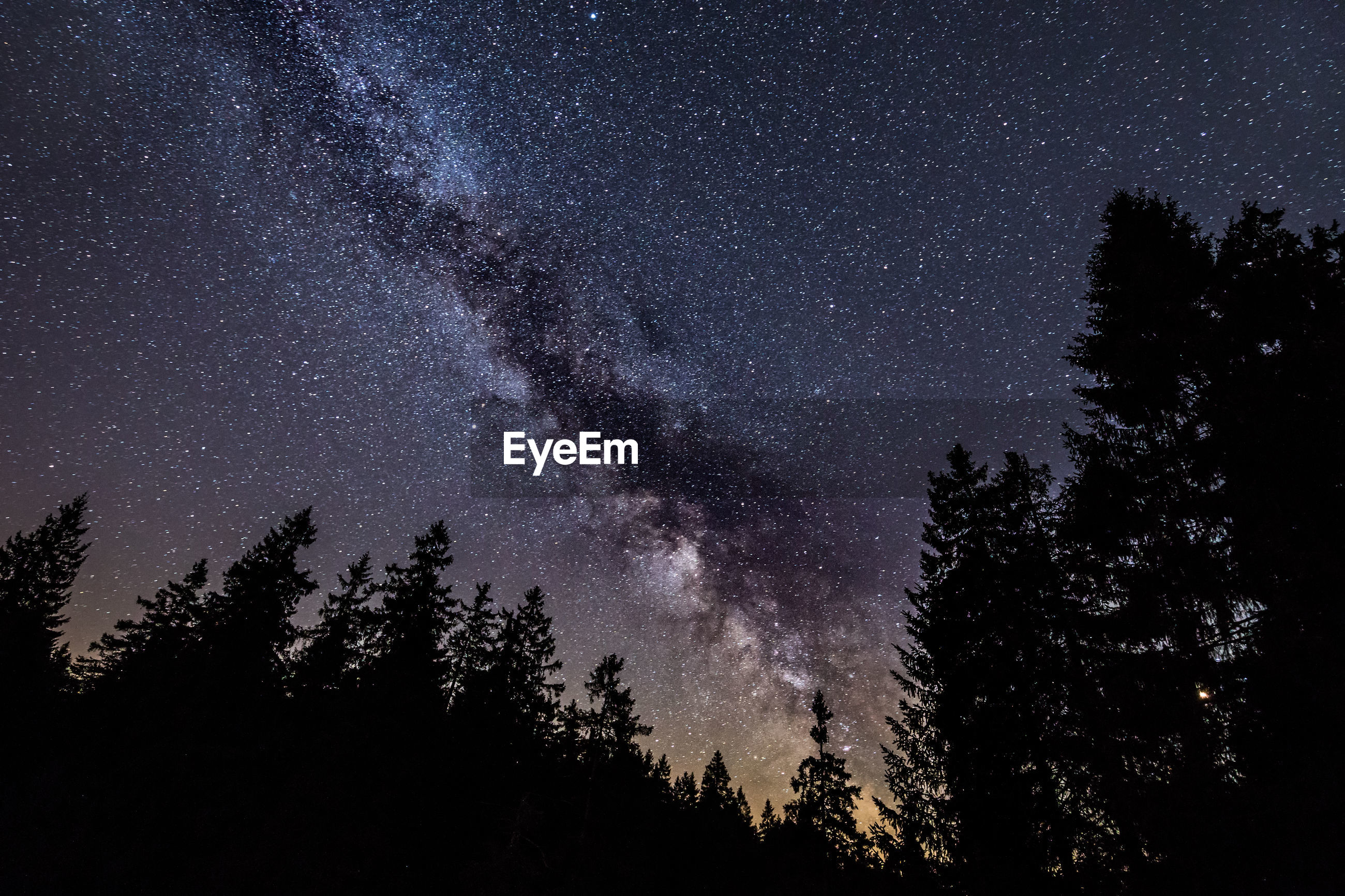 LOW ANGLE VIEW OF SILHOUETTE TREES AGAINST STAR FIELD
