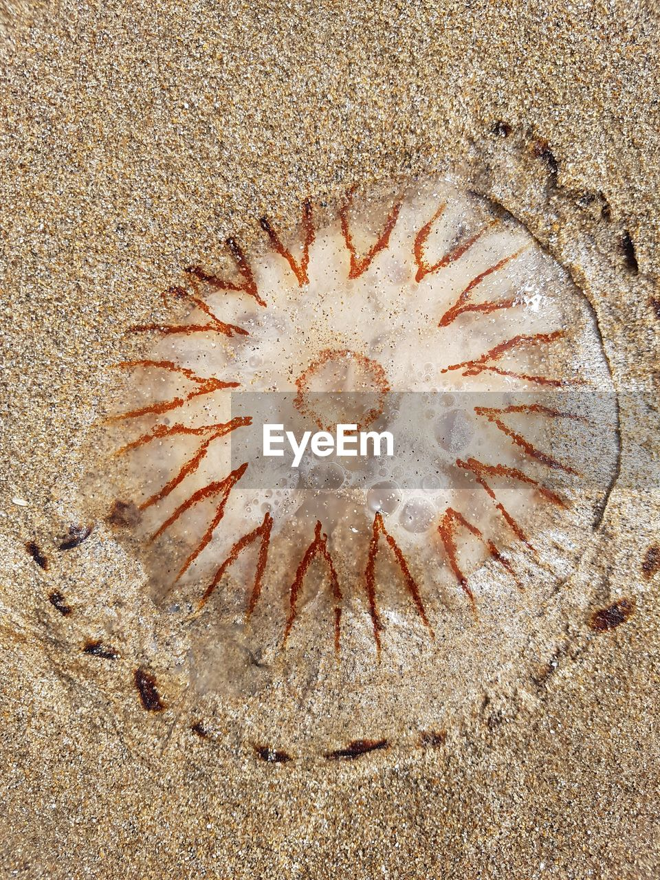 sand, beach, fossil, no people, desert, nature, sea life, close-up, day, outdoors, concentric, undersea