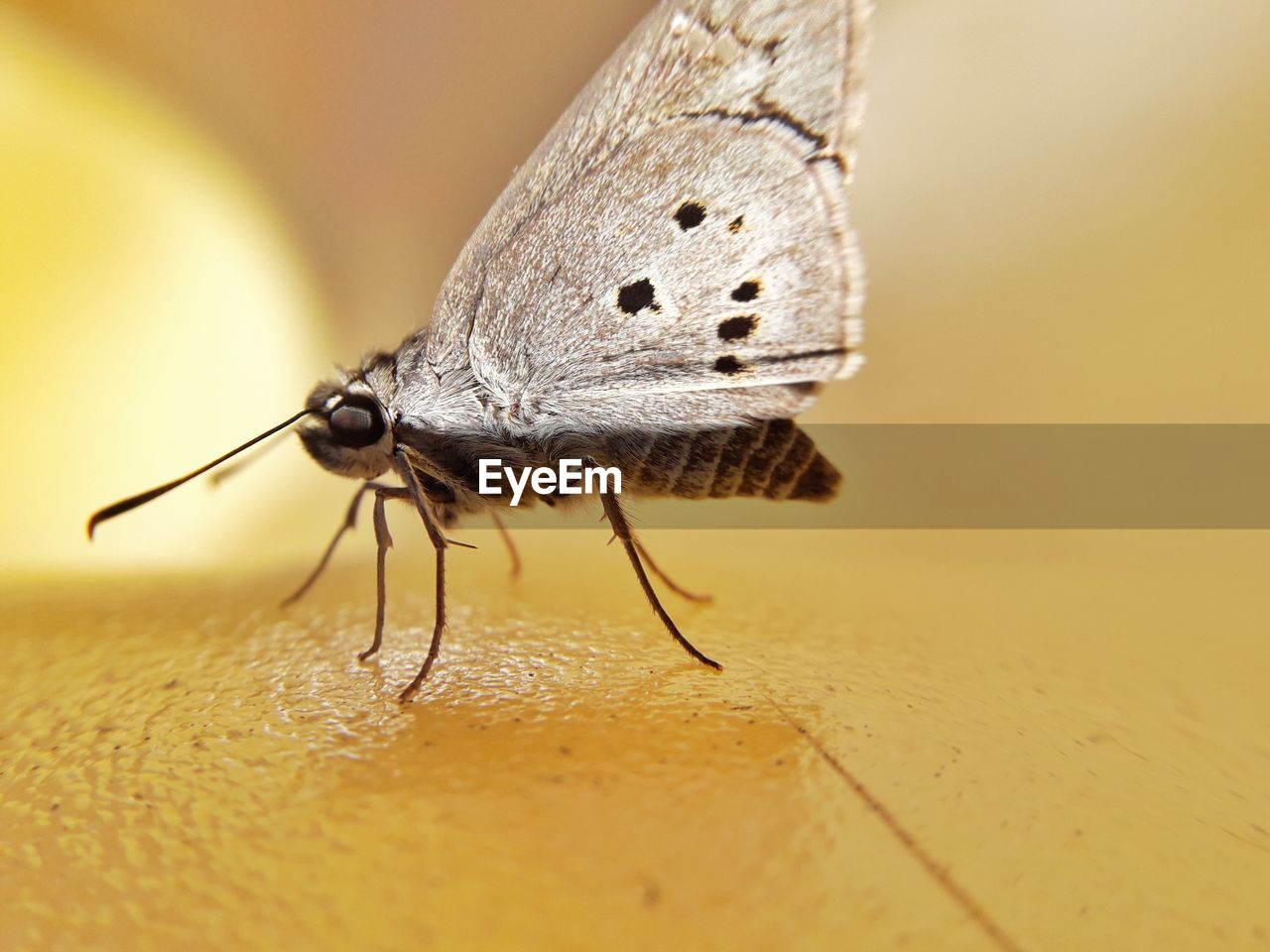 insect, invertebrate, one animal, animal themes, animal, animal wildlife, animals in the wild, close-up, selective focus, animal wing, no people, yellow, animal body part, day, animal antenna, nature, macro, zoology, full length, focus on foreground, butterfly - insect