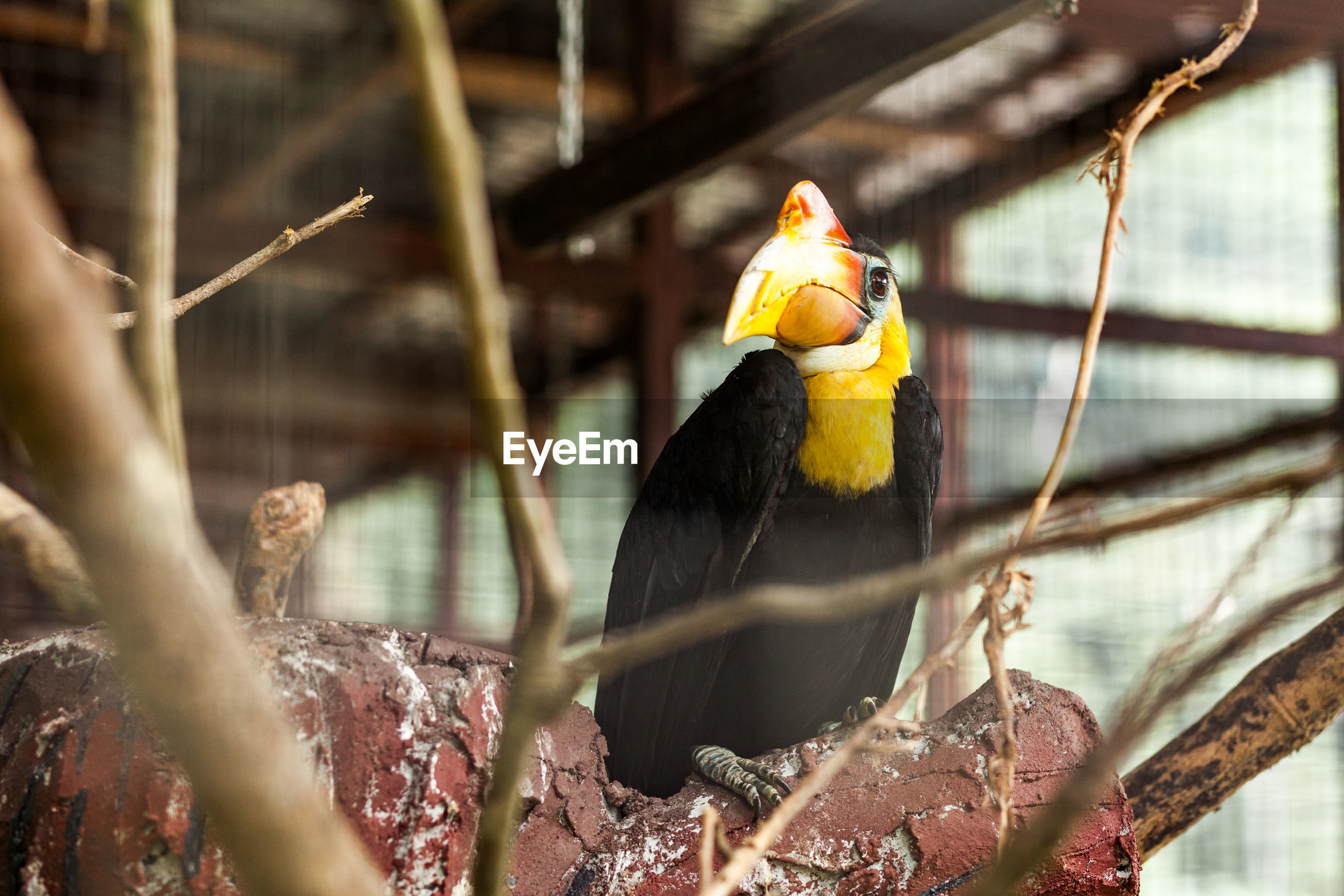 BIRD PERCHING ON A YELLOW CAGE