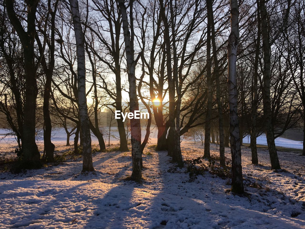 tree, nature, winter, tranquility, cold temperature, snow, sunlight, tranquil scene, no people, beauty in nature, scenics, outdoors, landscape, sky, day