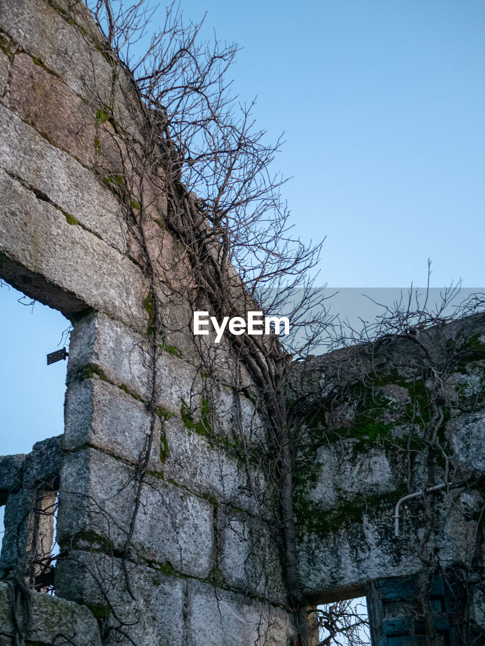 sky, low angle view, architecture, built structure, tree, clear sky, building exterior, wall, no people, nature, day, wall - building feature, plant, history, old, the past, stone wall, blue, solid, building, outdoors, ruined