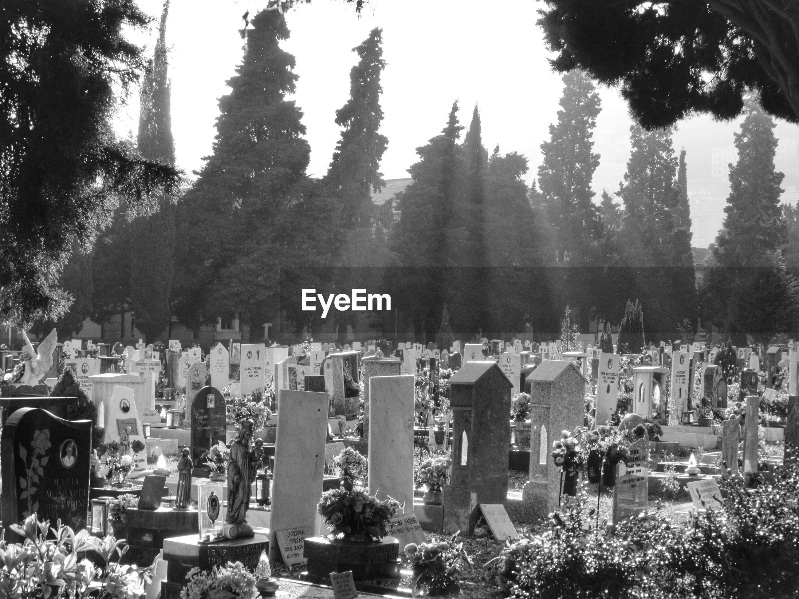 Sunlight falling on graveyard