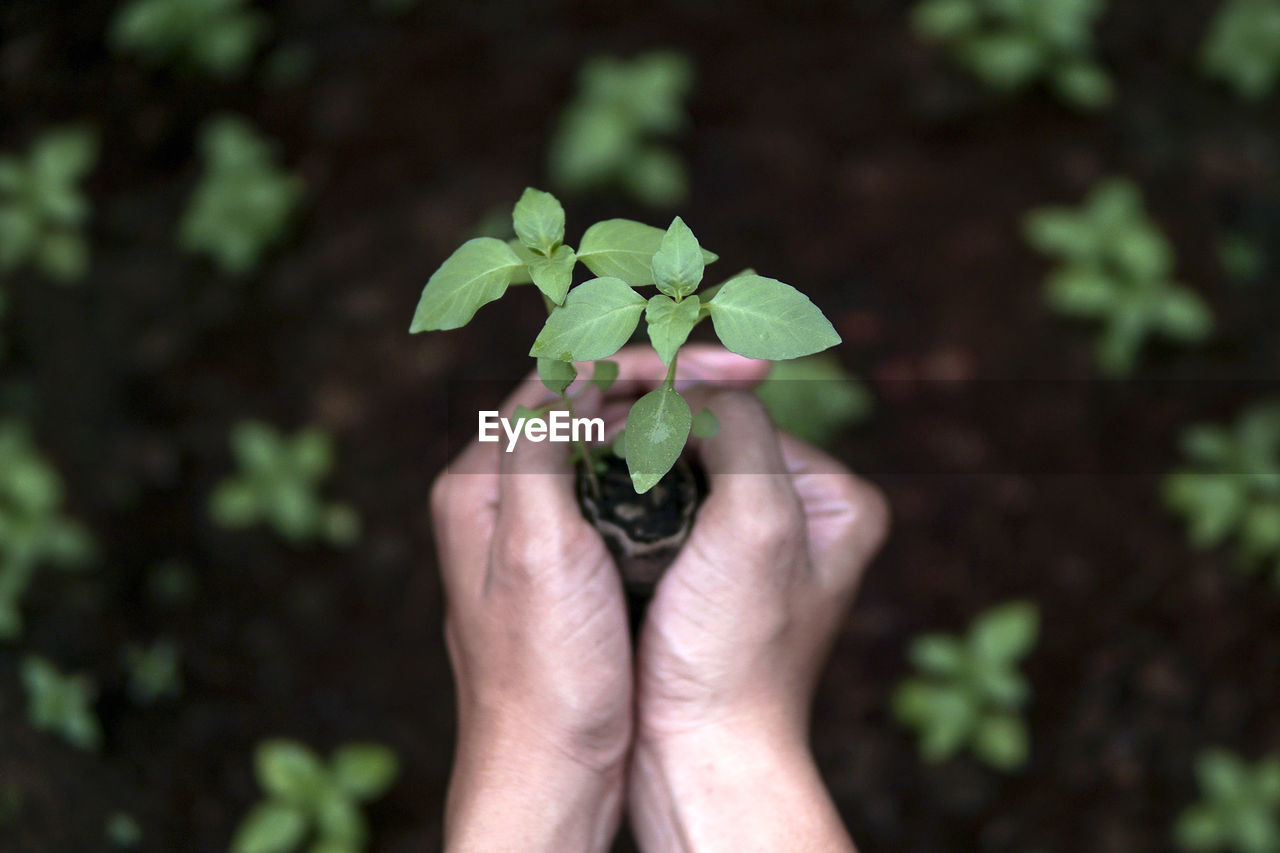 Close-Up Of Hands Holding Plant