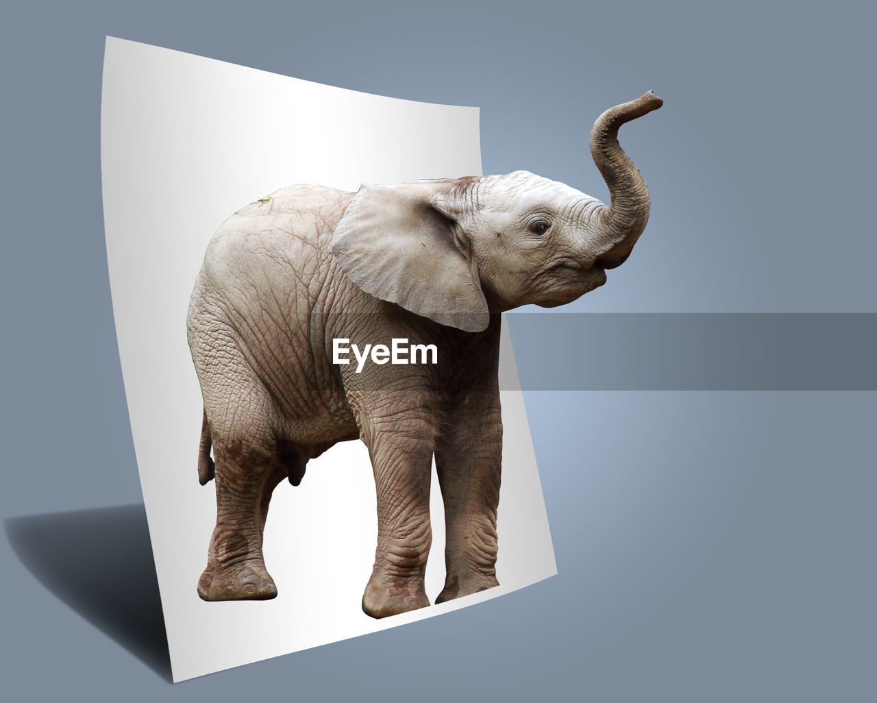 SIDE VIEW OF ELEPHANT AGAINST WHITE BACKGROUND