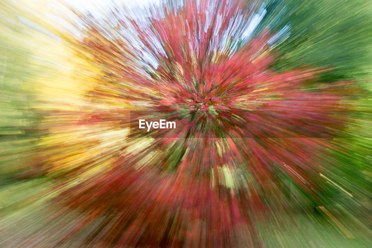 blurred motion, no people, motion, flower, full frame, backgrounds, multi colored, outdoors, nature, day, sky, close-up