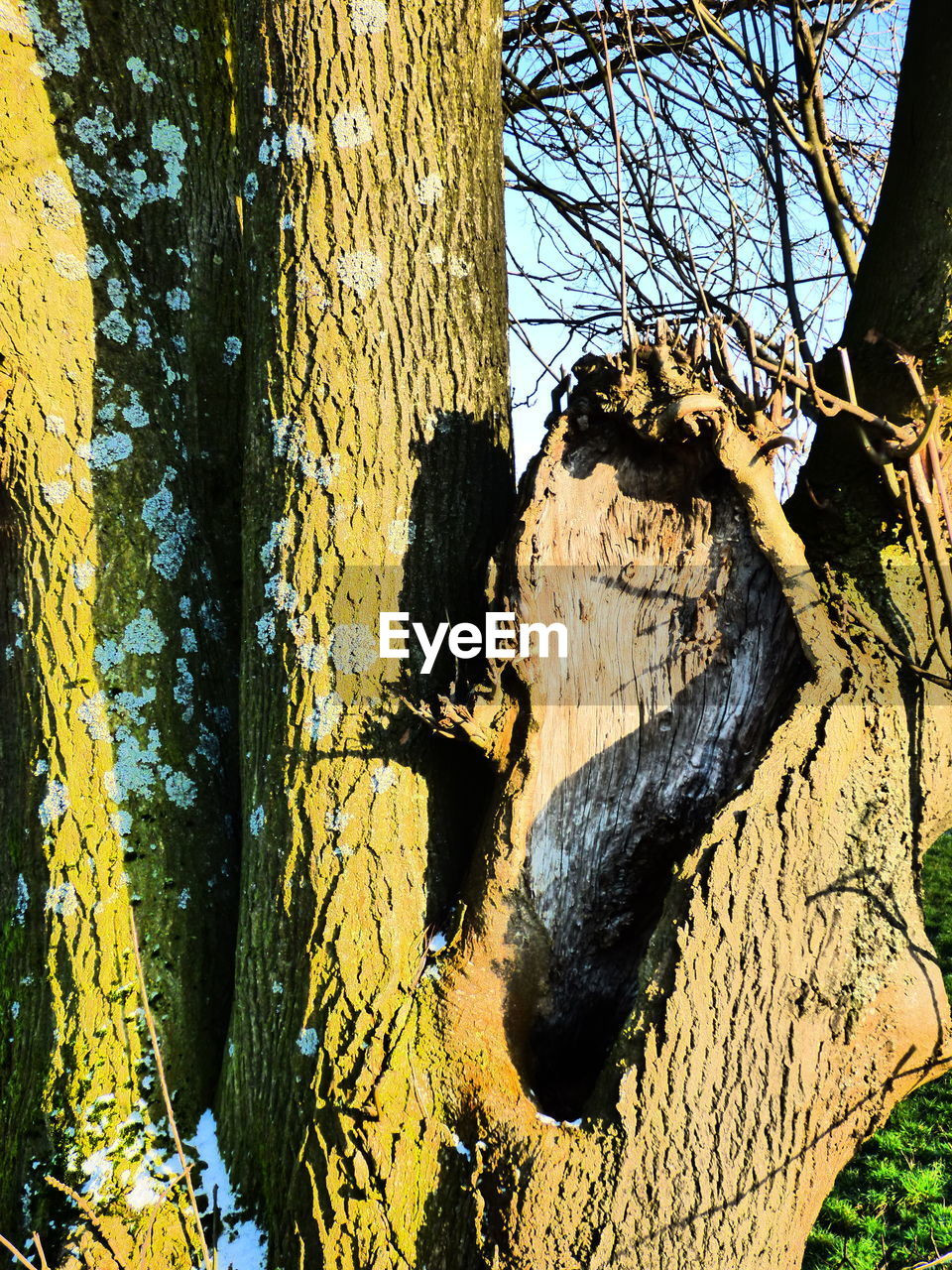 tree, tree trunk, branch, day, bark, outdoors, nature, no people, textured, close-up, bare tree, sunlight, yellow, forest, beauty in nature, sky